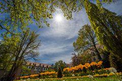 Tulpenblüte im Hofgarten