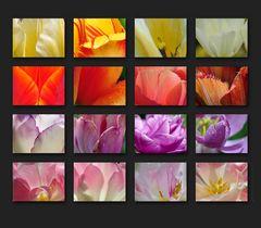Tulpenfarbpalette