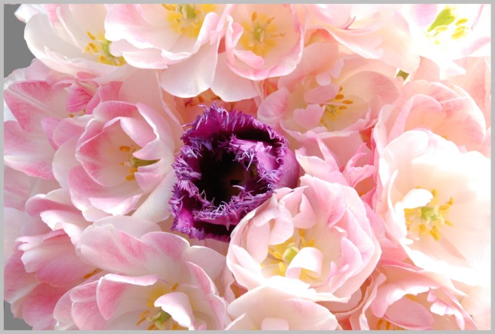 Tulpenkreis