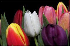 Tulpenmeer (3)
