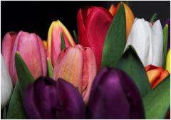 Tulpenmeer (4)