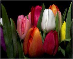 Tulpenmeer (6)
