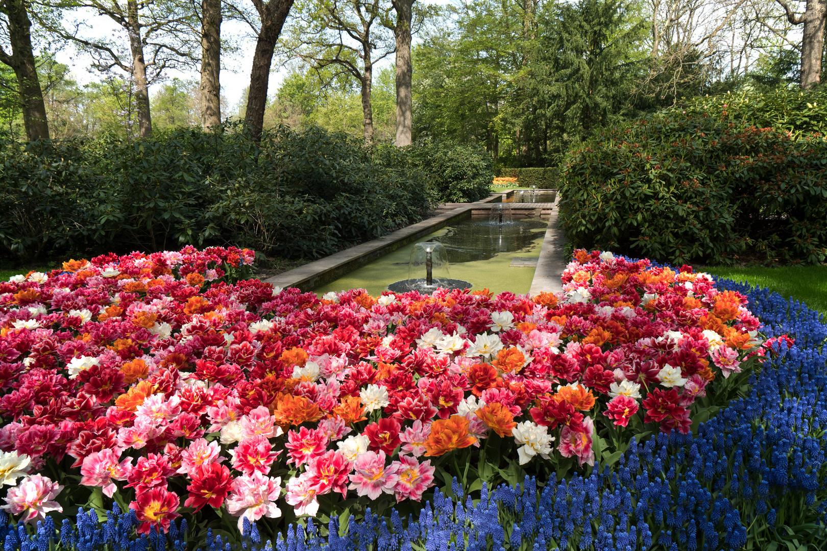 Tulpenmeer Keukenhof - Niederlande
