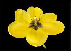 Tulpenparade 2