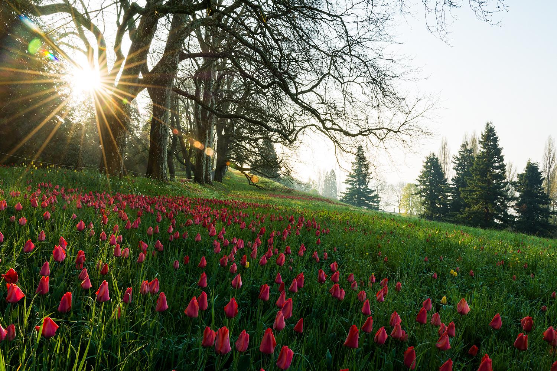 Tulpenparadies