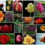 Tulpenschau aus meinem Garten