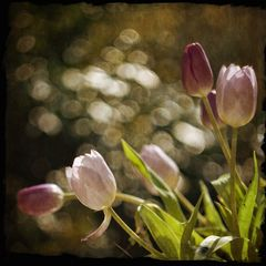 Tulpenspielerei