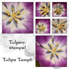 ...Tulpenstempel