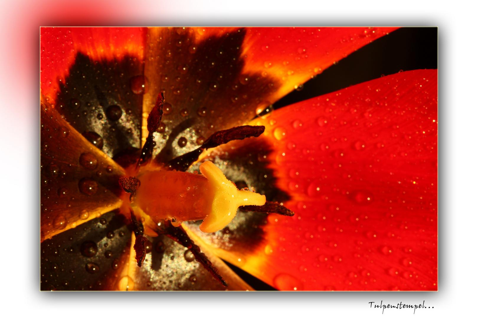 Tulpenstempel...