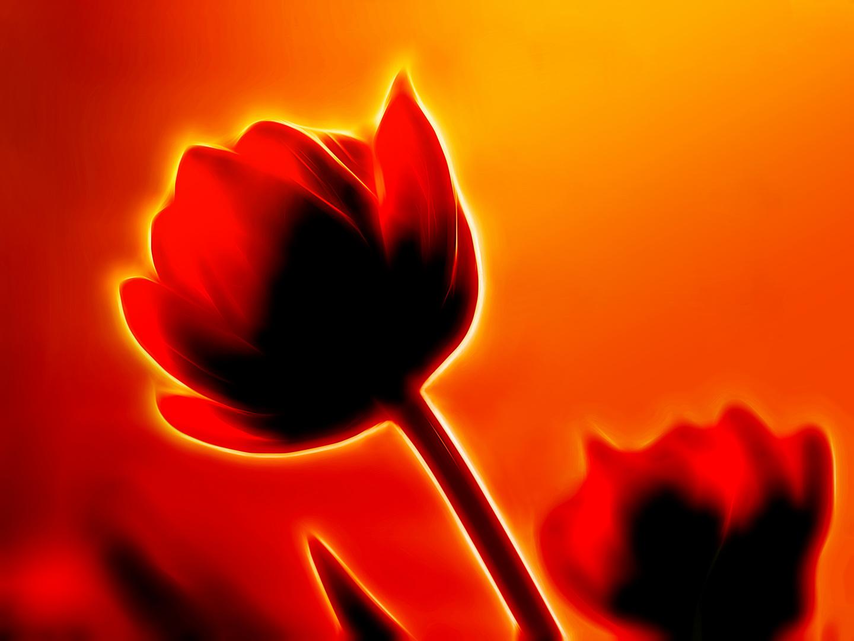 Tulpenträumereien