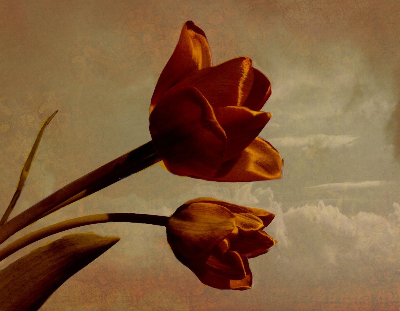 Tulpenvariation VI