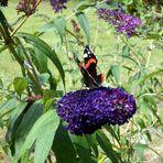 Tummelplatz für Schmetterlinge........ :-))