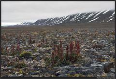 Tundra....