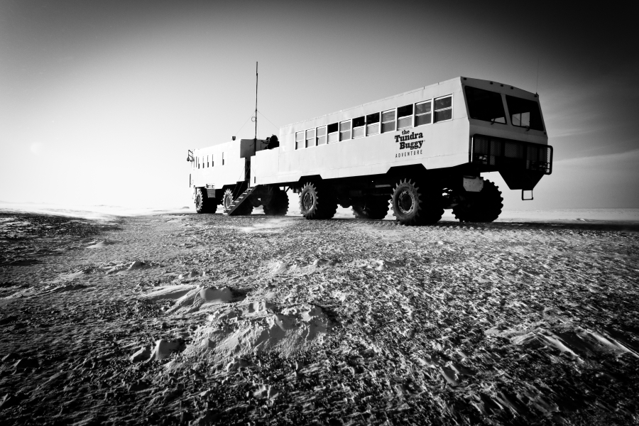 Tundra Buggy Expedition