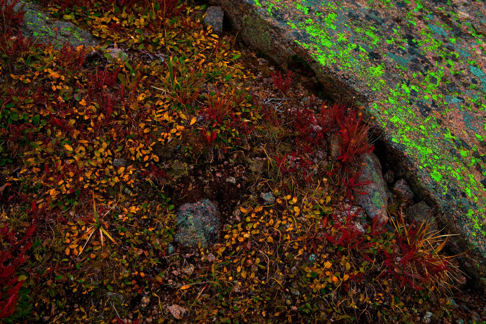 Tundra Floor