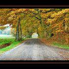 Tunnel di foglie e rami