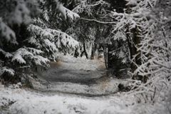Tunnel im Wald 2