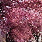 Tunnelblick: La vie en rose