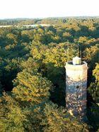 Turm größer als der Wald