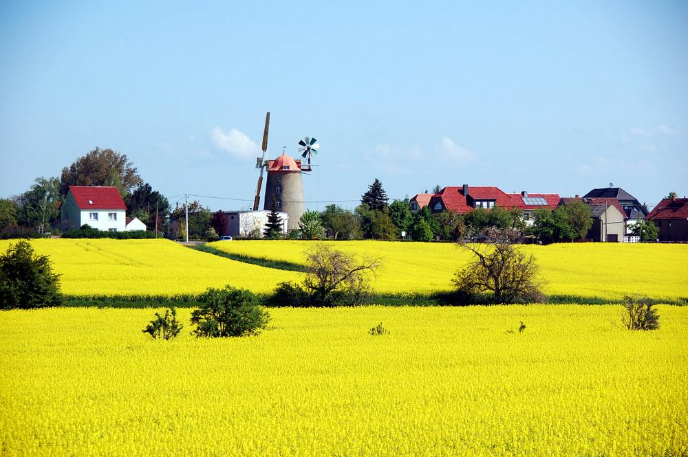 Turmholländerwindmühle Pahrenz
