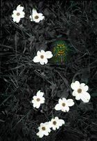 Turpin and  Dogwood Blooms