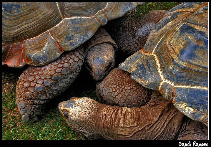 Turtle in Barcelona Zoo