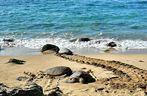 Turtlebay Hawaii