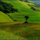 Tuscan Countyscape