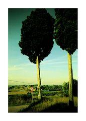 Tuscany #1