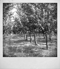 Tuscany #11