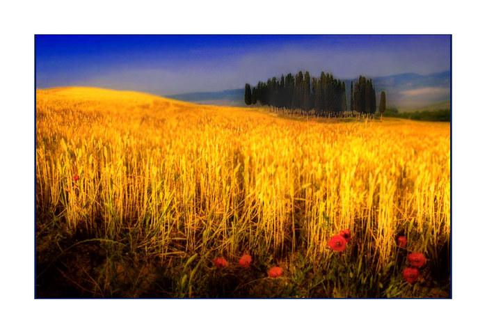 "Tuscany #150 ""Golden Crete"""