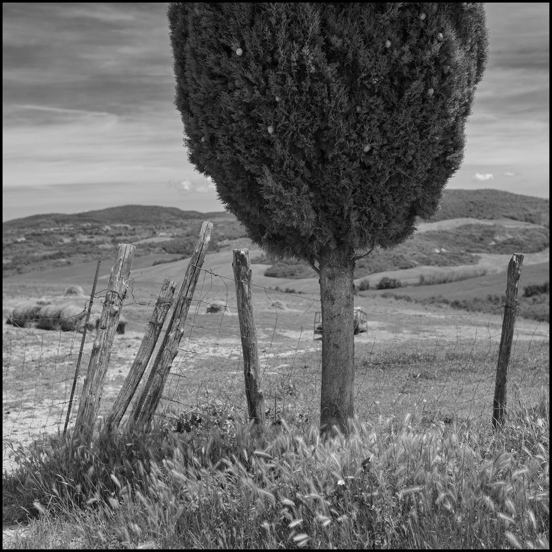 Tuscany#1