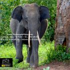 Tusker ( Sub-adult) on the way Side.
