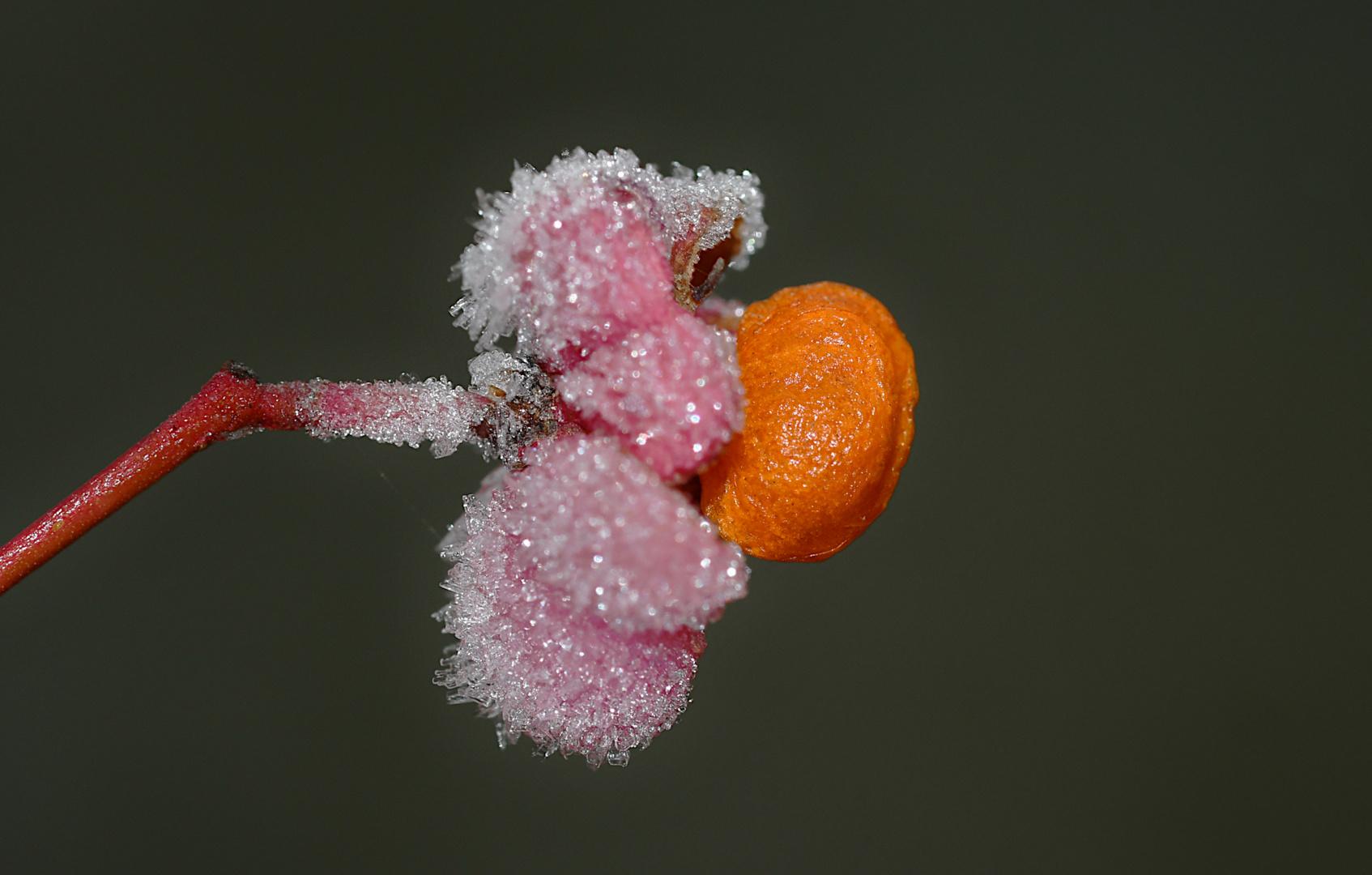 Tutti Frutti,...
