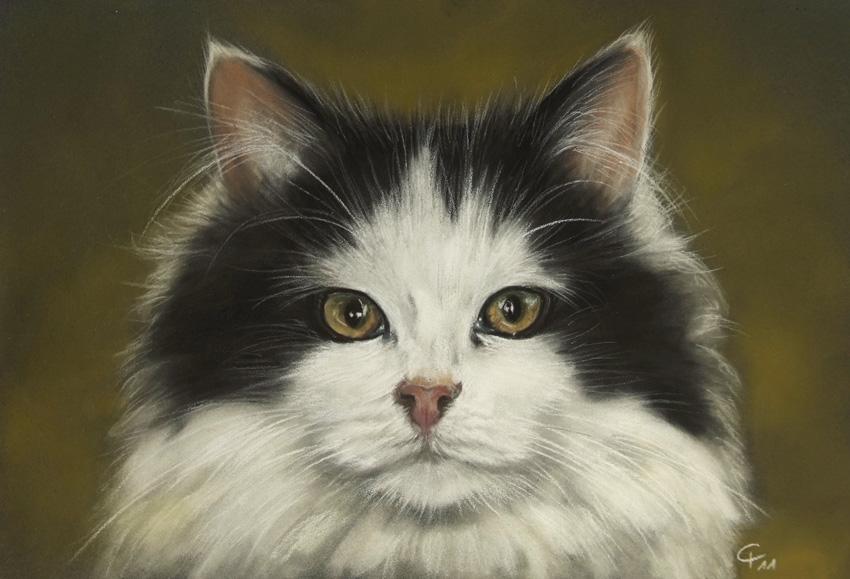 Tuxedo Kätzchen