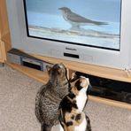 TV bildet eben doch ...