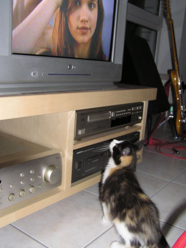 TV gucken....