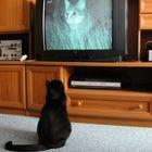 TV-Katze