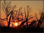 Tversted solnedgang V