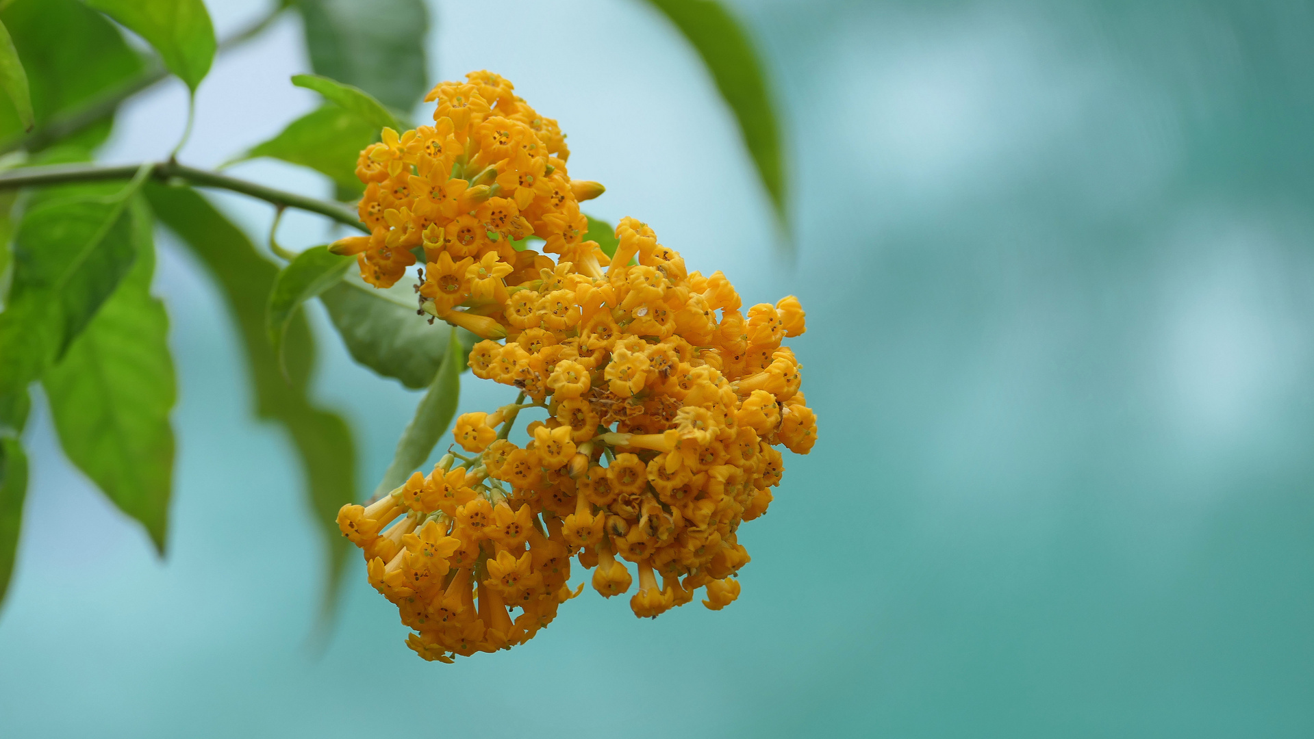 ... twig with small yellow flowers