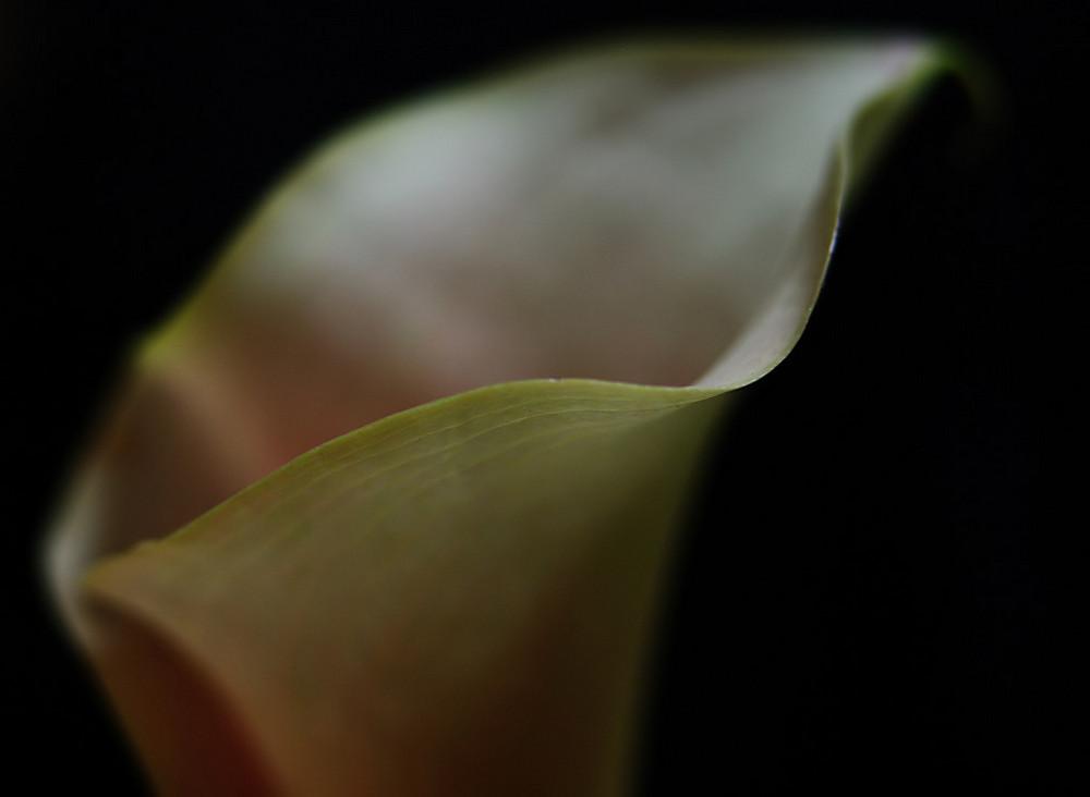 Twilightflower 1