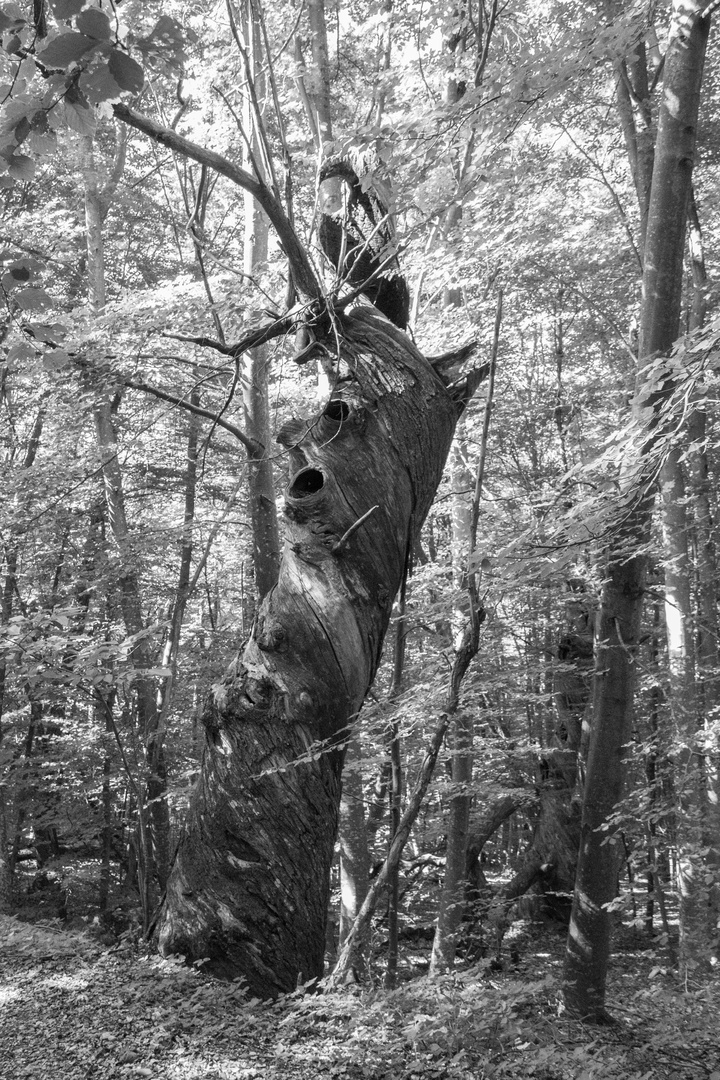 Twirling tree