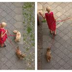 two dogs and a grandma