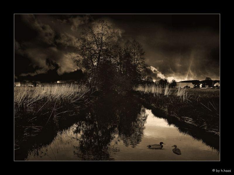 Two Ducks in Dark Night