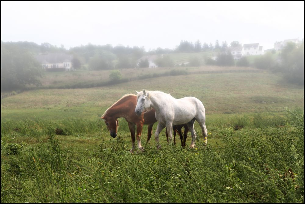 two in the meadow