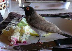 Twyfelfontein Country Lodge - Mein kleiner Freund hatte auch Hunger