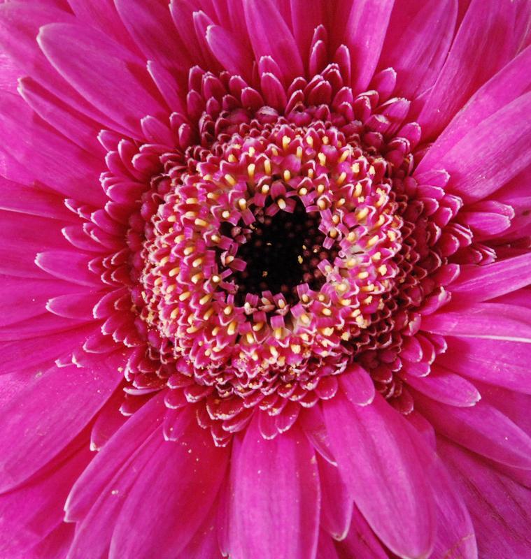 Type of daisy