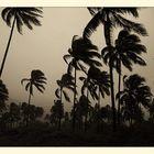 : typhoon in paradise :