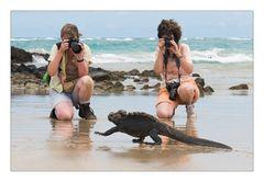 ...typisch Galapagos...
