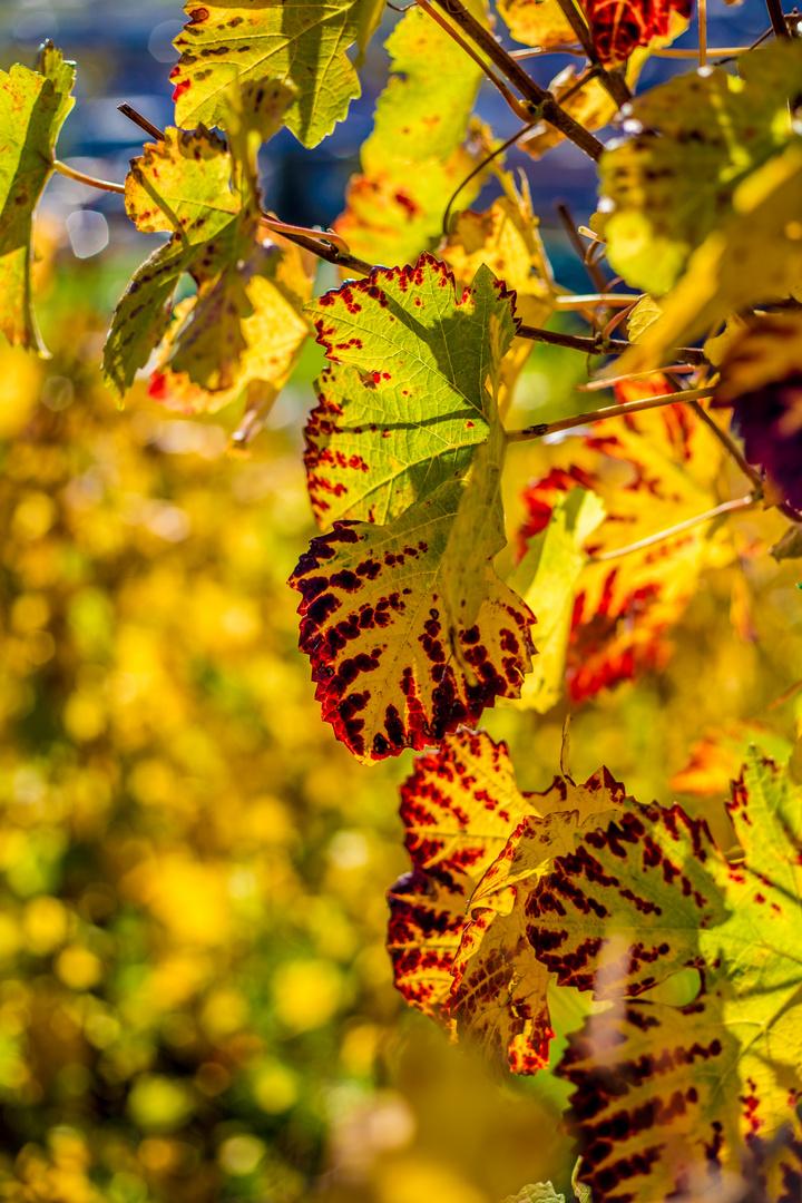 Typisch Herbst